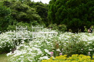 kimikore-dreaming-place-garden-06