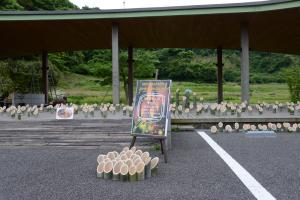 kimikore-hotaru-mifuneyama-10
